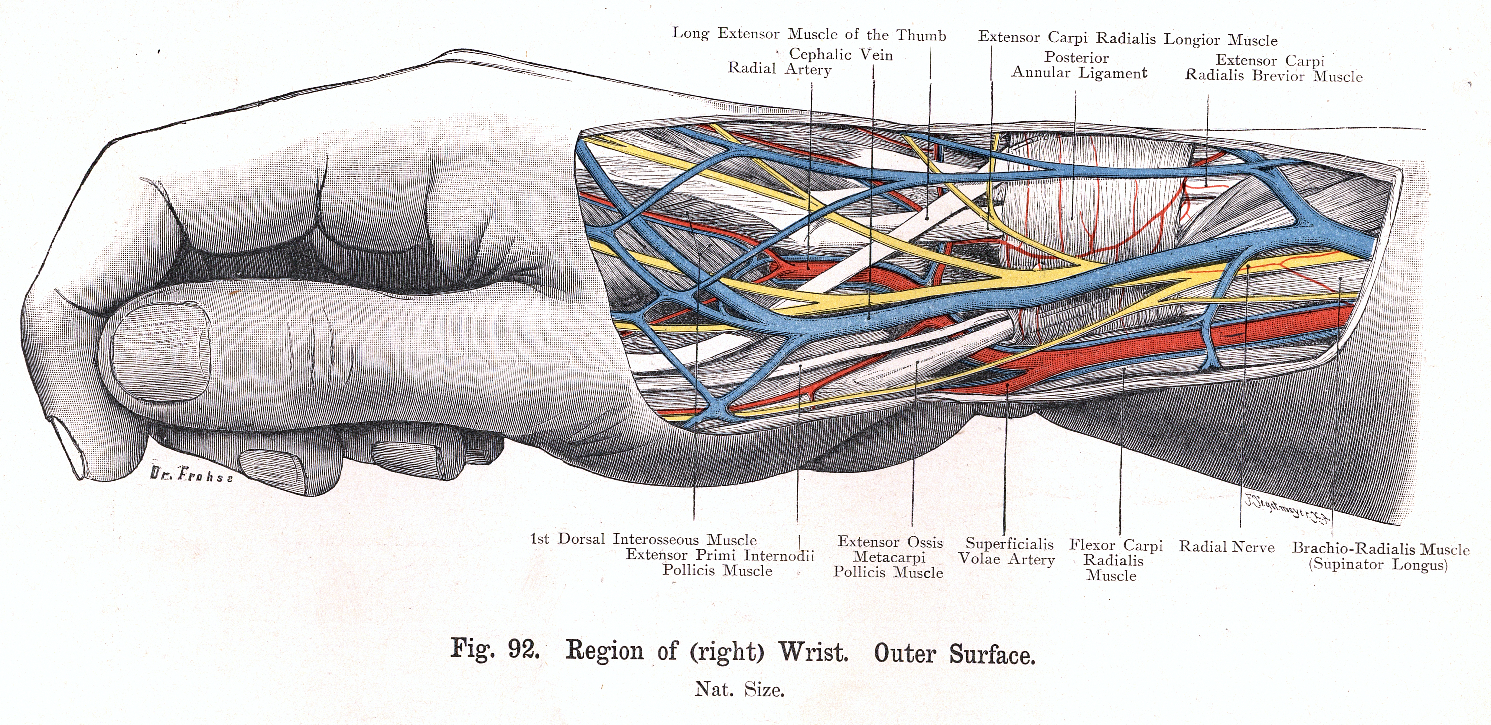 Browsing Anatomical Images Collection by Subject \