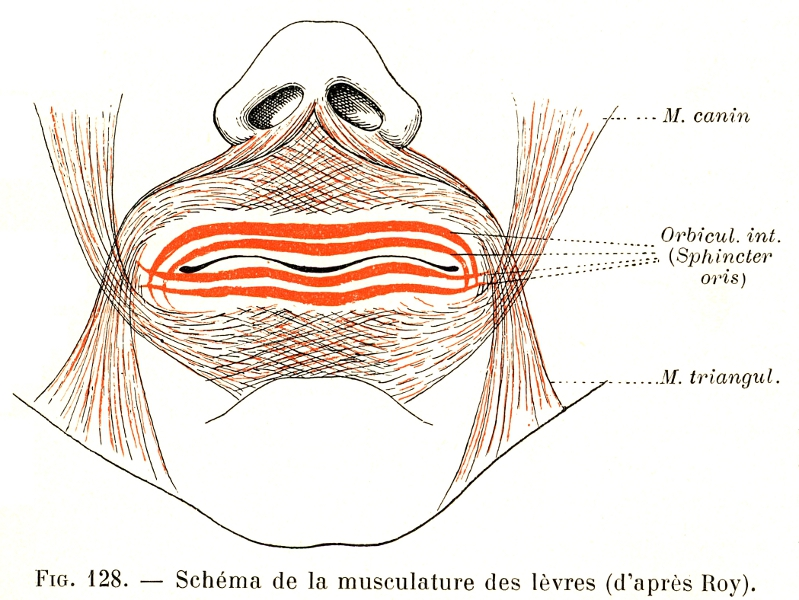Botox Lip Diagram